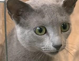 gatto_nessundorma