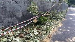 """Sagnino, un lettore denuncia: """"A 10 giorni dalla tempesta ancora piante e alberi lungo la strada"""""""