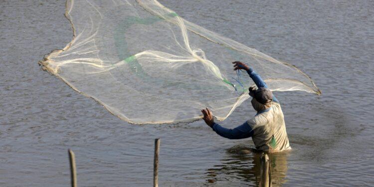 'Ecosistema rischia. Uso intensivo antibiotici e danni a pesca'