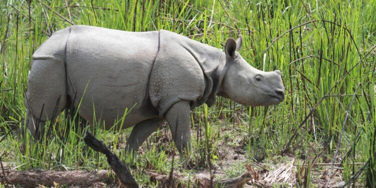 L'attuale popolazione ammonta a 752 animali