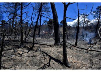 Bruciati oltre 55 chilometri quadrati di pinete