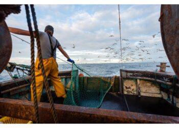 Fissati limiti per 75 stock ittici e accesso ad altre specie