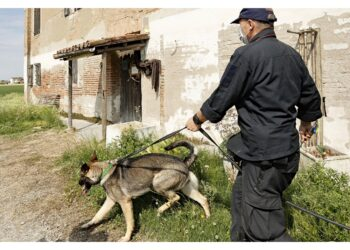 Da metà settimana prossima nuovo impiego di cani e strumenti