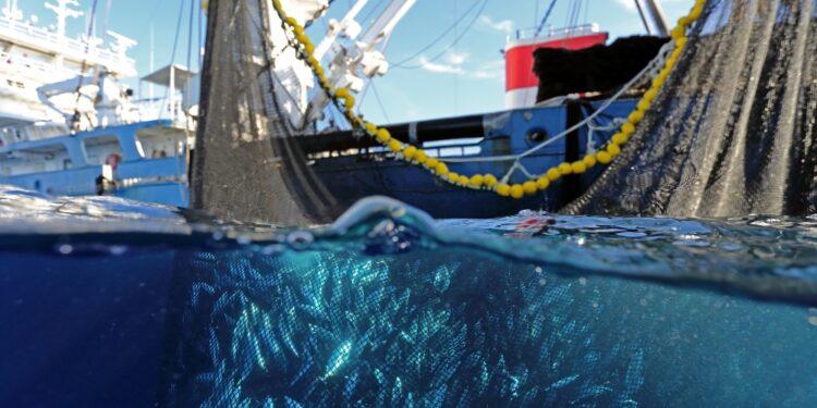 Quasi 70% approvvigionamento da pesca certificata