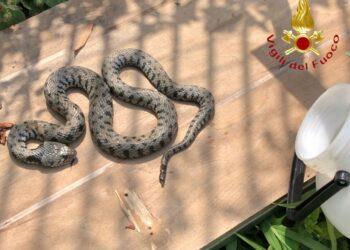 serpente a como