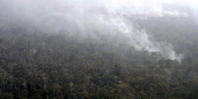 Ma governo ammette che deforestazione sarà ridotta solo del 5%