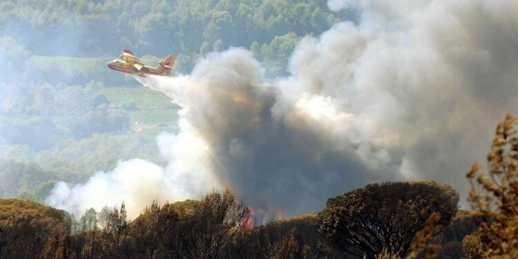 Bruciati 3.500 ettari di bosco
