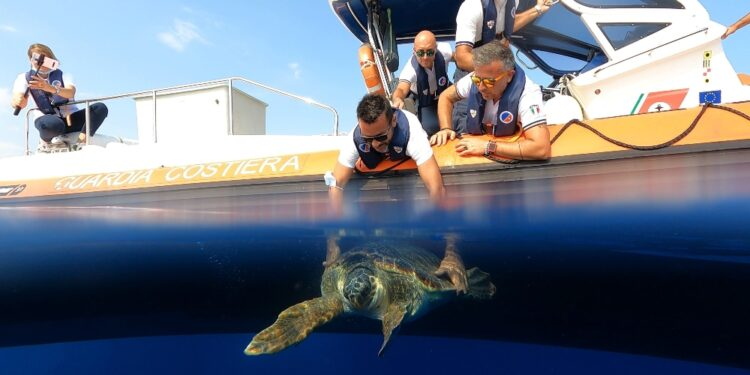 69 giorni a Acquario Genova per plastica in intestino