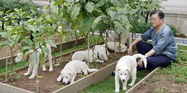 Ogni anno fino a un milione di cani finiscono in pentola