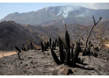 Bruciati almeno 7.400 ettari