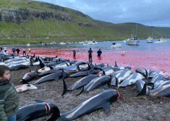 Domenica scorsa oltre 1.400 esemplari uccisi in un giorno