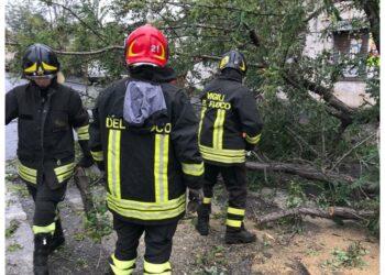 Interventi dei vigili del fuoco per alberi e cartelli caduti